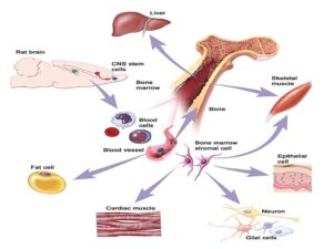 Sources of stem cells (Courtesy: Terese Winslow, Lydia Kibiuk, and Caitlin Duckwall)