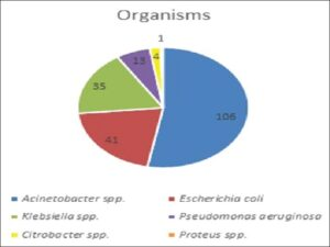 Frequency distribution of bacterial isolates obtained in culture