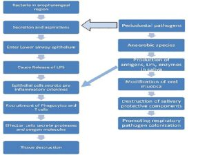 Mechanism for tissue destruction in COPD and role of periodontal pathogens
