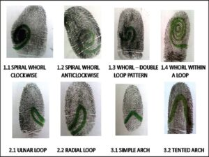 Whorl pattern, loop pattern, arch pattern and their subtypes